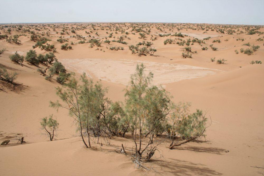 Landscape climate change