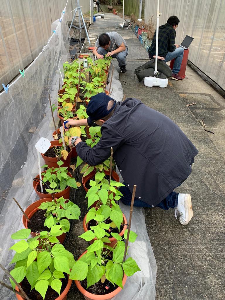 cuhk-ozonedamageonplants1