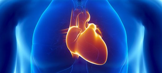 heart_cross_section